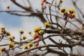 울진에서 꽃으로 전하는 봄소식