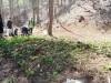 산나물 단지 직영조성으로 국유림경영 기반 확충