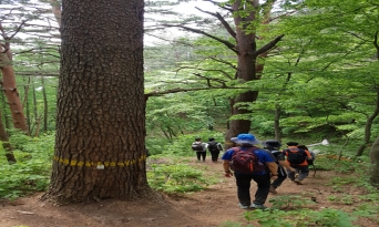 울진 금강소나무숲길, 7월의 걷기 여행길에 선정