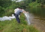 울진군 토속어류 잉어, 붕어 14만 마리 방류