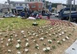 울진군, 도로변 곳곳에 아름다운 여름 꽃 식재